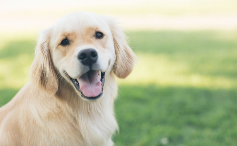 Can Your Dog Benefit from a Grain-Free Diet?