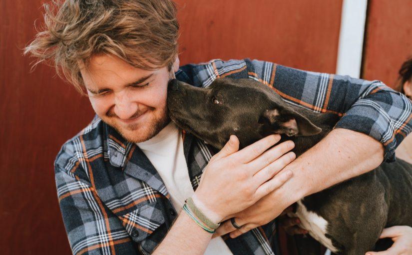 Identifying Cushing's Disease in your Dog