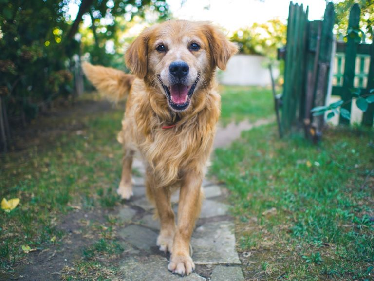 ways to care for a cushing's dog