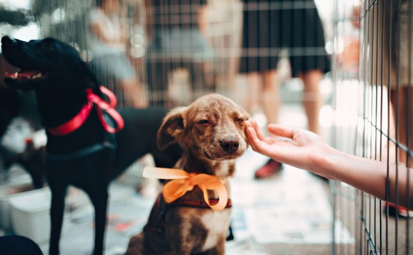 CushAway Partners with Shelter All Those Left Behind Pet Rescue